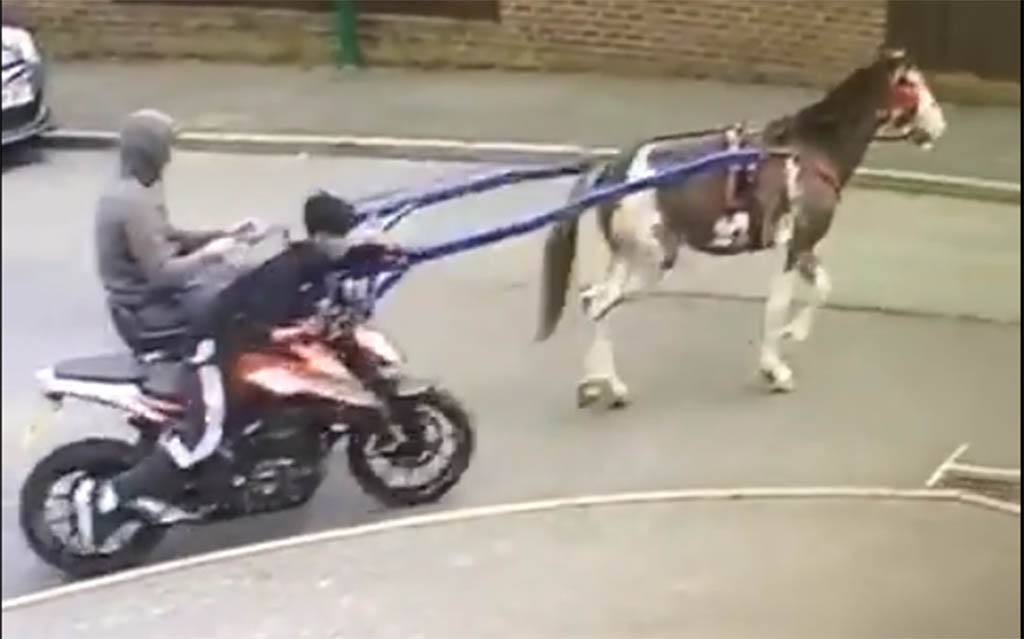 Using your horse to steal a motorcycle